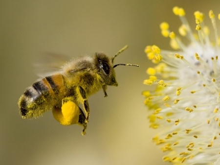 5 Things About Bees That Will Amaze You | Bee America