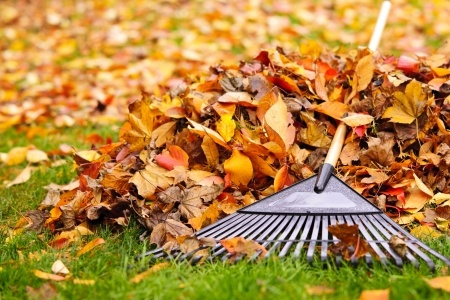 Fall Leaf Raking