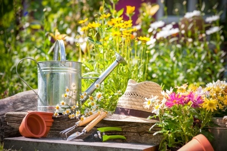 Father's Day Gardening Guide