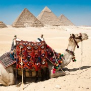 Ancient Egypt Pyramids and Camel